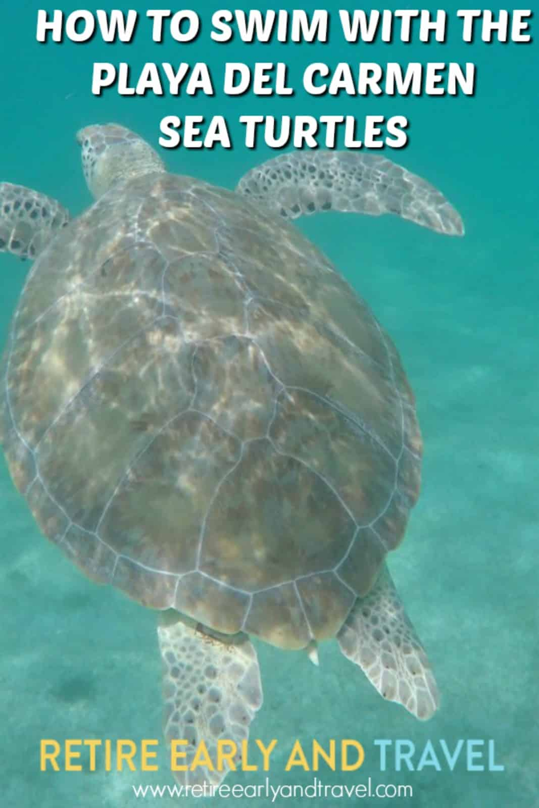 Playa Del Carmen Sea Turtles – How to Swim With