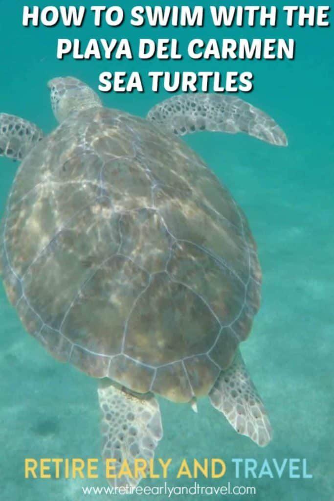 playa del carmen sea turtles