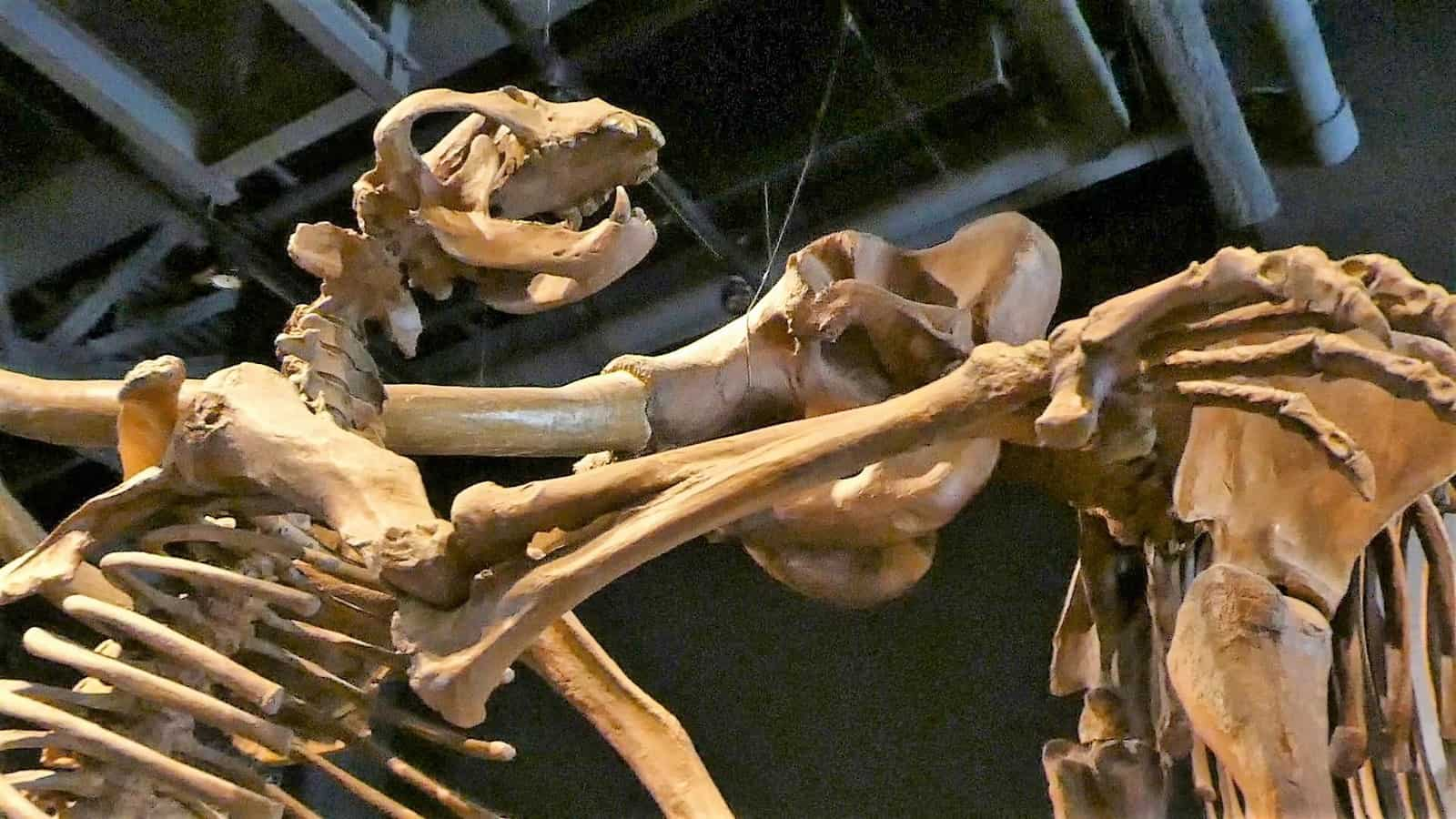 natural history museum things to do in salt lake city
