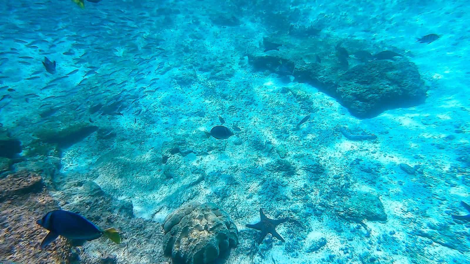 Mosquera Island snorkeling